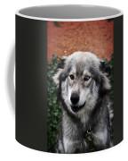 Blue And Brown Eyed Husky Coffee Mug