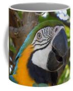 Blue And Gold Macaw Coffee Mug