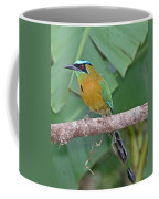 Blue-crowned Motmot 1 Coffee Mug