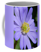 Blue Daisy Up Close Coffee Mug