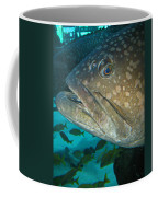 Blue-eyed Grouper Fish Coffee Mug