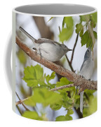 Blue-gray Gnatcatcher Coffee Mug