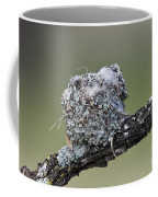 Blue-gray Gnatcatcher Nest Coffee Mug