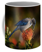 Blue Jay 1 Coffee Mug