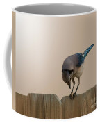 Blue Jay Eating Corn Coffee Mug