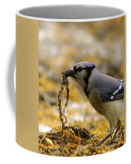 Blue Jay Nest Building Coffee Mug