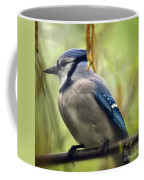 Blue Jay On A Misty Spring Day - Square Format Coffee Mug