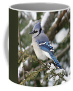 Blue Jay On Hemlock Coffee Mug