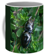 Blue Lined Beetle Coffee Mug