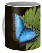 Blue Morpho Butterfly On Fren Dsc00441 Coffee Mug