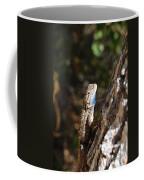 Blue Throated Lizard 4 Coffee Mug