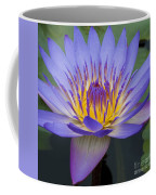 Blue Water Lily - Nymphaea Coffee Mug by Heiko Koehrer-Wagner