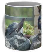 Bluejay And Mockingbird Coffee Mug