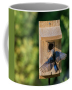 Bluebird At Nest Coffee Mug