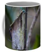 Bluebird With Nest Material In Beak Coffee Mug