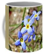 Bluets Upclose Coffee Mug