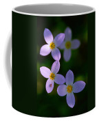 Bluets With Aphid Coffee Mug