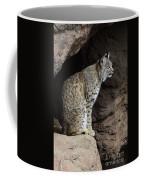 Bobcat Coffee Mug by Bob Christopher