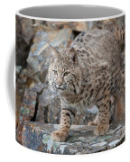 Bobcat On Rock Coffee Mug