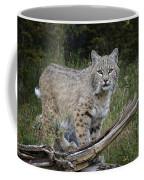 Bobcat On The Prowl Coffee Mug