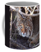 Bobcat Squared Coffee Mug