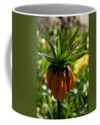 Bold And Showy Orange Crown Imperial Flower  Coffee Mug