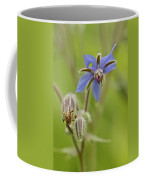 Borage Wildflower - Borage Officinalis - Annual Herb Coffee Mug