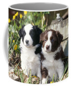 Border Collie Dog, Two Puppies Coffee Mug