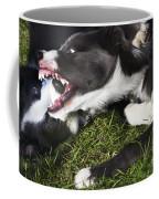 Border Collies Playing Coffee Mug