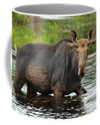 Boreal King Coffee Mug