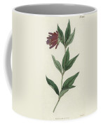Botanical Engraving Coffee Mug