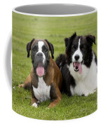 Boxer And Border Collie Coffee Mug