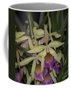 Brassocattleya Paulae   4823 Coffee Mug