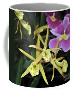 Brassolaelia Yellow Bird And Pink Miltoniopsis  Coffee Mug
