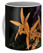 Brassolaeliocattleya Hawaiian Treat Coffee Mug