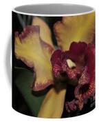 Brassolaeliocattleya Melinda Wheeler Halcyon Coffee Mug