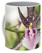 Bratonia Miltassia Charles M Fitch Izumi Orchid Hawaii  Coffee Mug