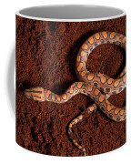 Brazilian Rainbow Boa Coffee Mug