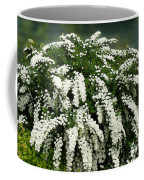 Bridal Wreath Spirea - White Flowers - Florist Coffee Mug