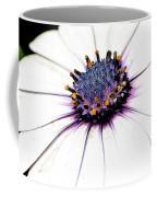 Bright White Osteospermum Coffee Mug