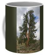 Brisslecone Pine Tree Coffee Mug