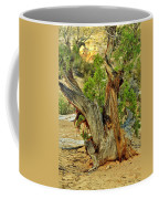 Bristlecone 1 Coffee Mug