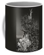 Bristlecone And Wildflowers In Black And White Coffee Mug