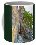 Bristlecone Pine On Ramparts Trail In Cedar Breaks National Monument-utah  Coffee Mug