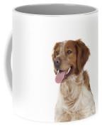Brittany Dog, Close-up Of Head Coffee Mug