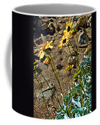 Brittlebush On Borrego Palm Canyon Trail In Anza-borrego Desert Sp-ca Coffee Mug