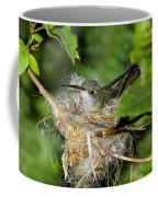 Broad-billed Hummingbird In Nest Coffee Mug