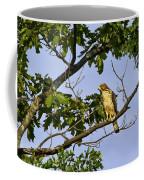 Broad Winged Hawk Coffee Mug