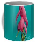 Bromelia Bilbergia Windii Coffee Mug by Heiko Koehrer-Wagner