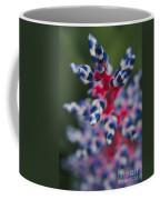 Bromeliad - Aechmia Dichlamydea - Guzmania Lingulata Coffee Mug